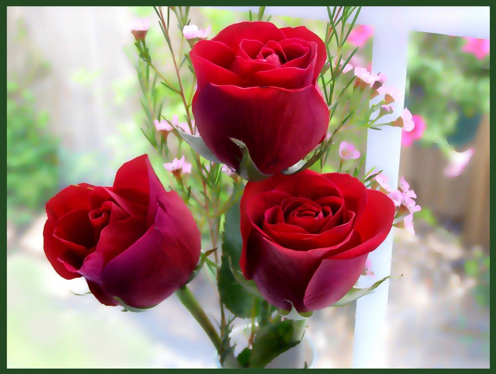 Rose Flowers Wallpaper Android Apps on Google Play HD