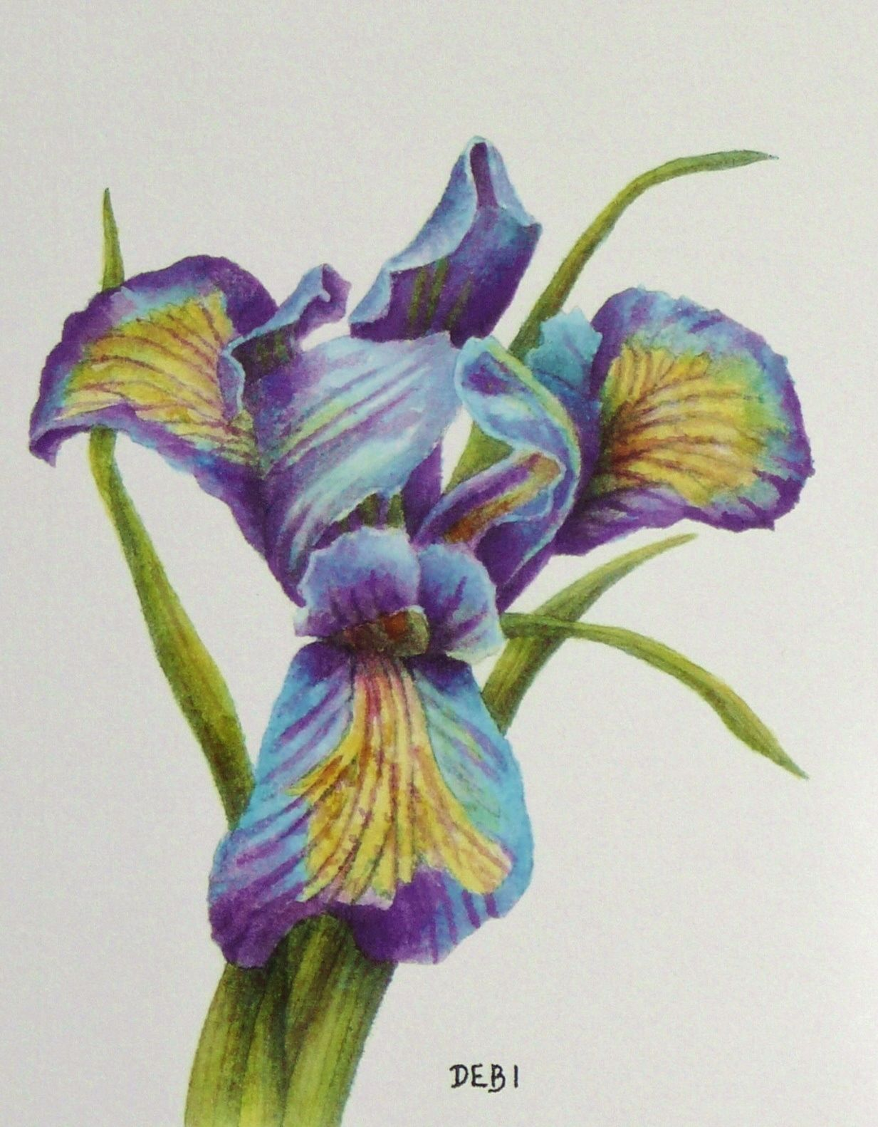 To Welcome Spring I Painted This Watercolor Titled Purple Iris