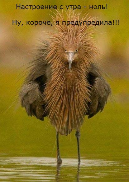 Dobroe Utro Kartinki S Nadpisyu Str 1 Domashnie Pticy Samye