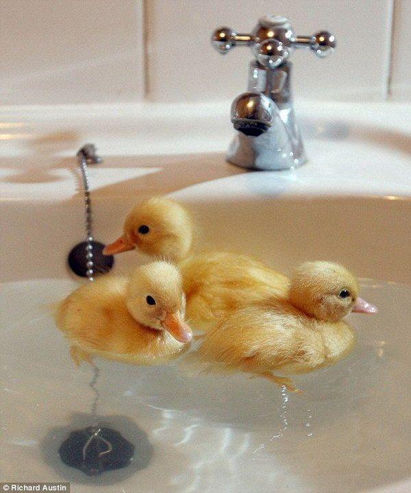 aaaaaaaaaaaaaaaw | Cute Birds | Pinterest | Animal, Bird and Baby ...