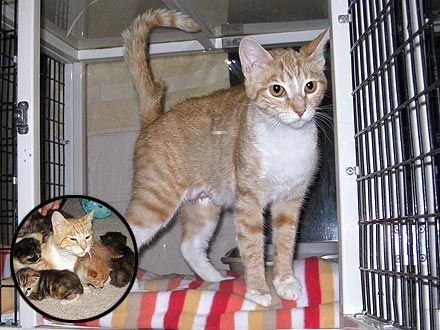 Cat Shot in Head with BB Gun Stays with Her Kittens -This is a REAL Tiger Mother