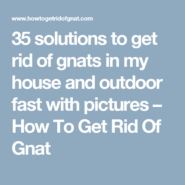 35 Solutions To Get Rid Of Gnats In My House And Outdoor Fast With Pictures How To Get Rid Of Gnat How To Get Rid Of Gnats Getting Rid Of Nats Gnats