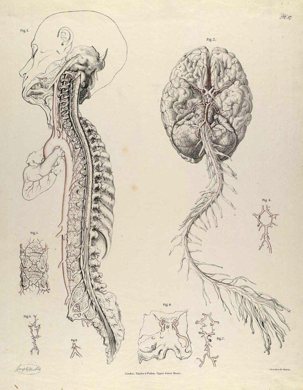 Nymphomaniac | I | Pinterest | Anatomy, Anatomy drawing and Drawings