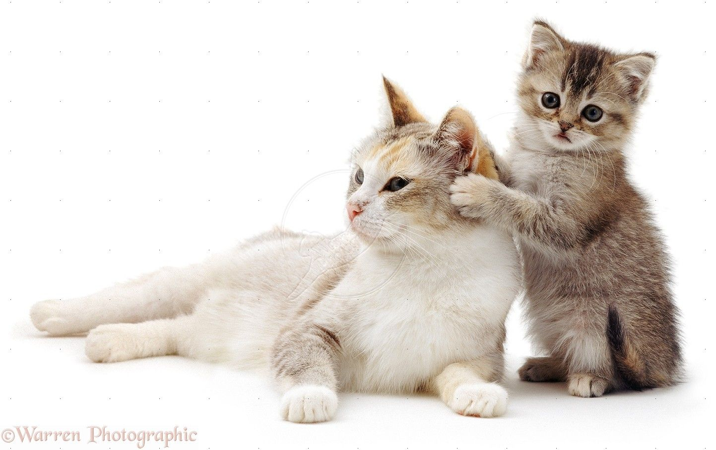 cute kittens & cats photos mother cat Pearl with her