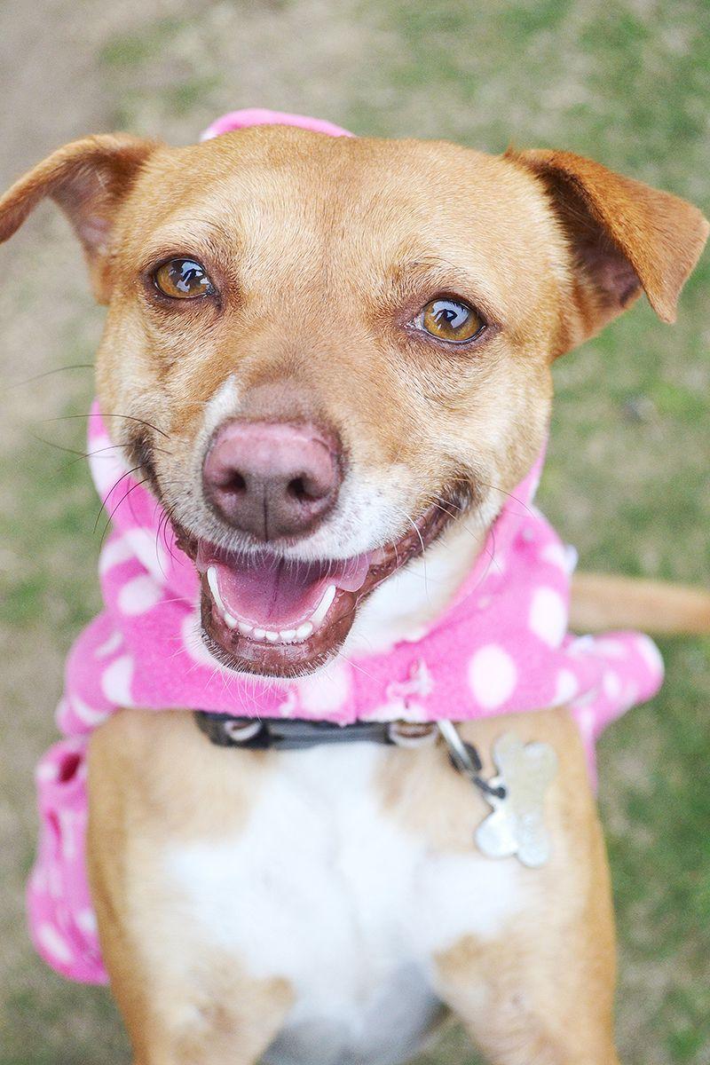 Adopt a Pet Puppy adoption, Dog adoption, Dogs
