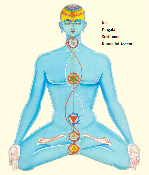 Nadis. Description on Tantra-Kundalini.com. Illustration from the book Chakras: Energy Centers of Transformation by Harish Johari.