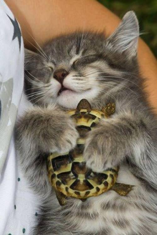 Penka Atanasova Google Cute Animals Animals Friendship Baby Animals