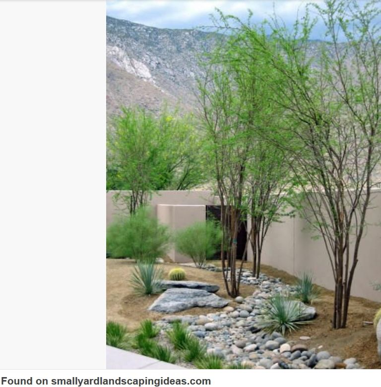 Arizona Modern Landscapes: Pin By Franki3 On Plants Trees