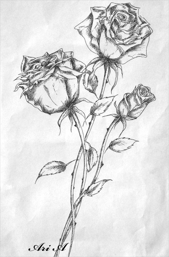 Rose Drawings - 27+ Free PSD, AI, Vector EPS Format Download   Roses drawing, Flower drawing ...