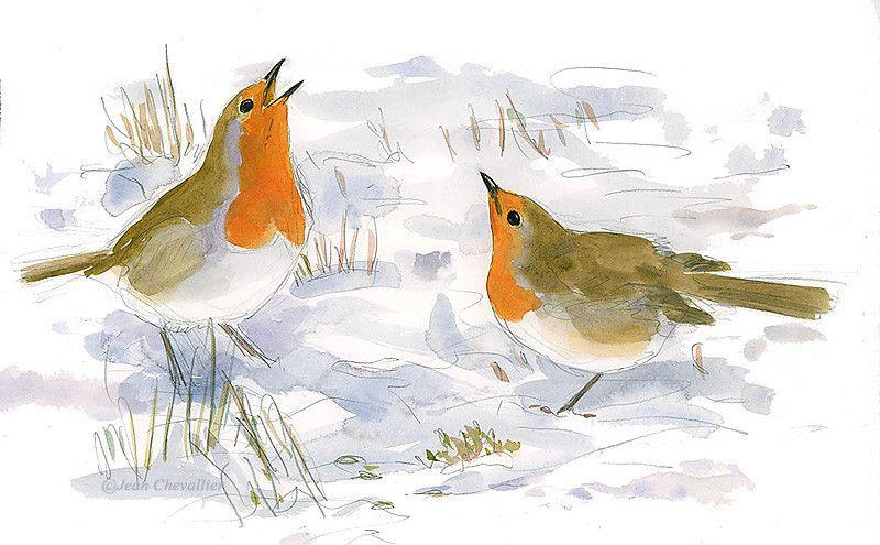 Oiseaux Jean Chevallier Illustrateur Naturaliste Peintre