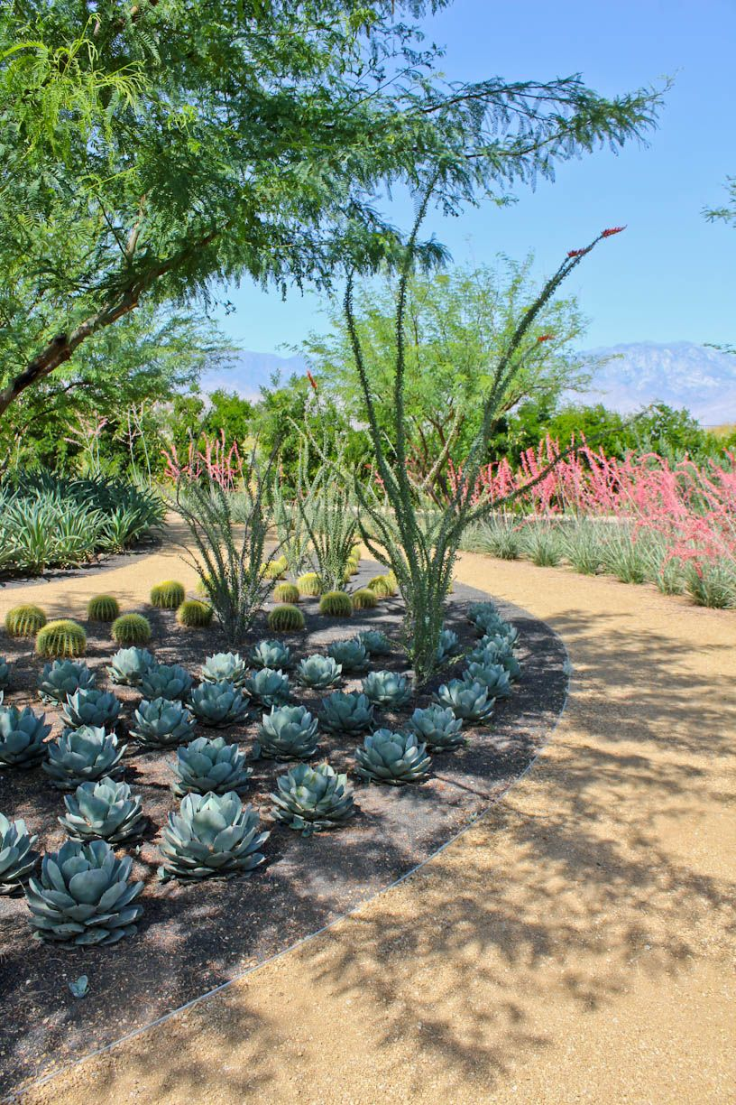 Succulent Garden Designs photo of an eclectic landscape in san diego Sunnylands About Plants Succulent Garden Cactus Garden Landscaping Garden Design