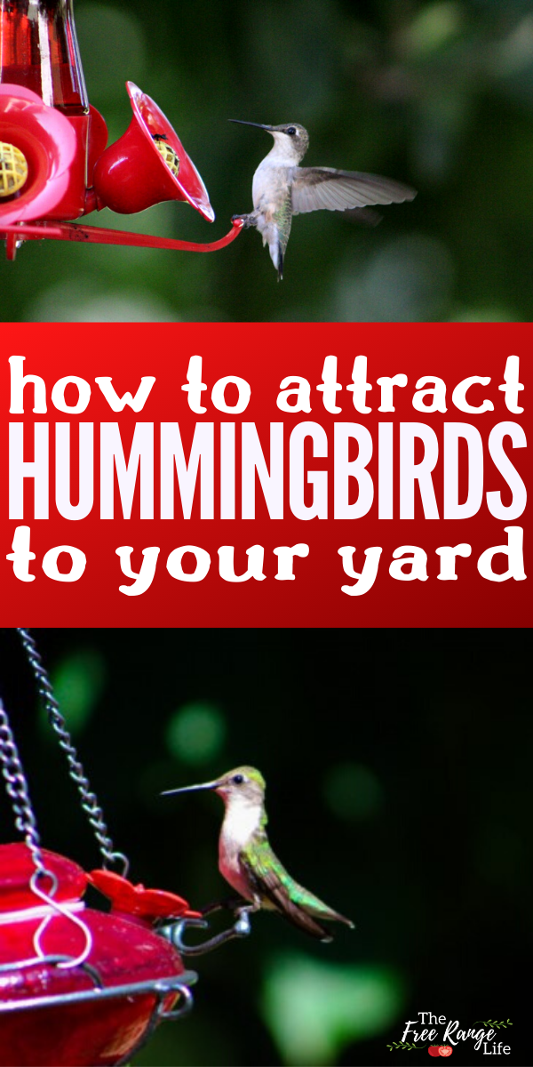 How to Attract Hummingbirds to Your Garden and Hummingbird ...