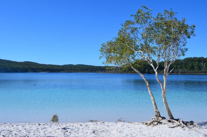 Small Group Fraser Island 4wd Tour From Hervey Bay Including Indian