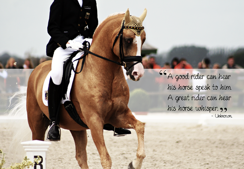 """""""A good rider can hear his horse speak to him. A great"""