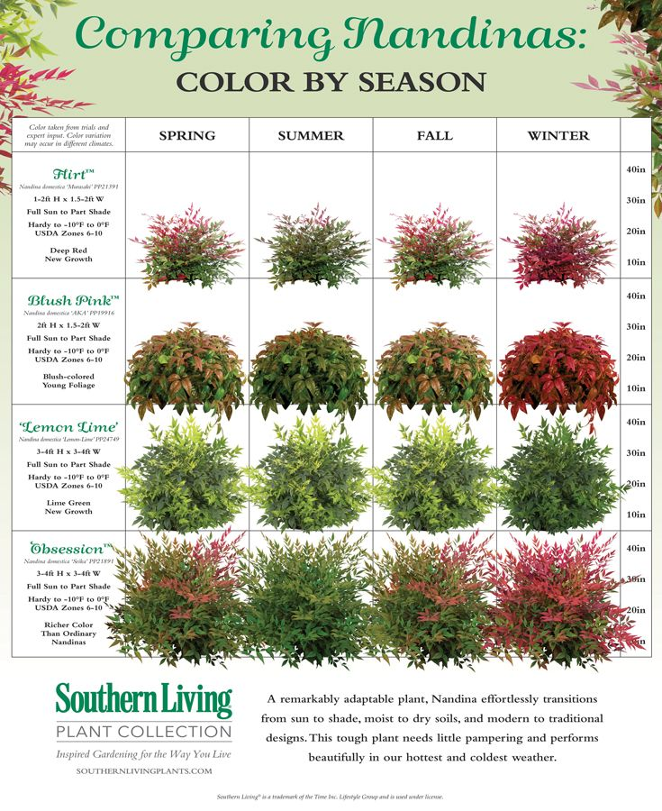 Sizing Up Nandinas Plants Garden Shrubs Yard Landscaping