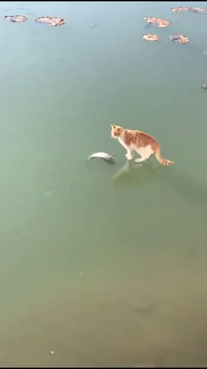 Give me the fish already!!!
