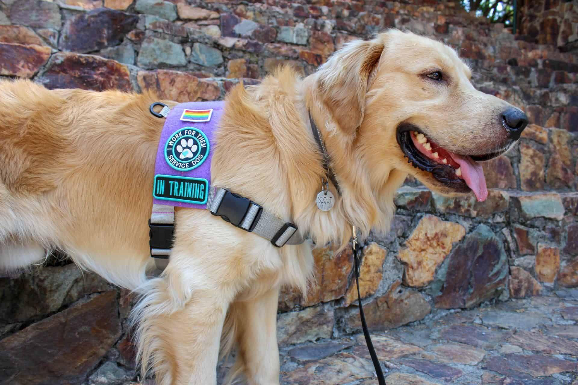 Gigantic List Of The Top 150 Service Dog Tasks Psychiatric