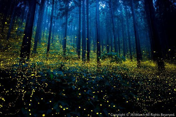 La beauté des forêts japonaises peuplées de lucioles immortalisée dans des clichés surréalistes