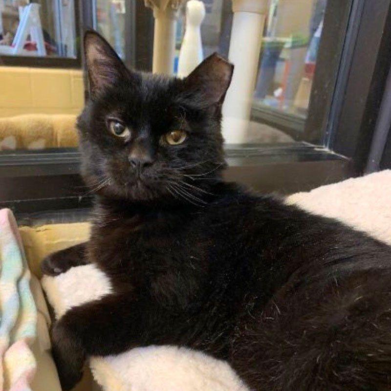 Felv Positive Adoption Program Profile Series Ohio Alleycat Resource Cat Problems Adoption Feline Leukemia