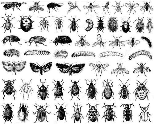 Reseña: El libro de los insectos humanos | Ramen Para Dos ...