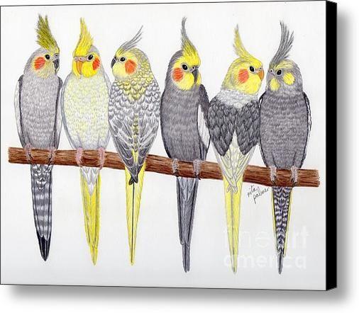 Six Cockatiels Canvas Print By Rita Palmer Bird Artwork Painted Rock Animals Bird Art