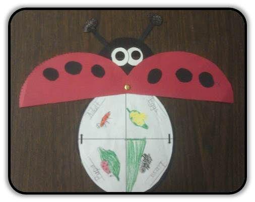 Ladybug Life Cycle | Ladybug life cycle, Ladybugs preschool, Life ...