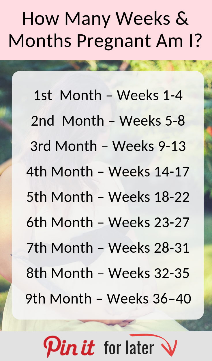 How Many Weeks In A Month : weeks, month, Pregged, Pregnancy, Articles