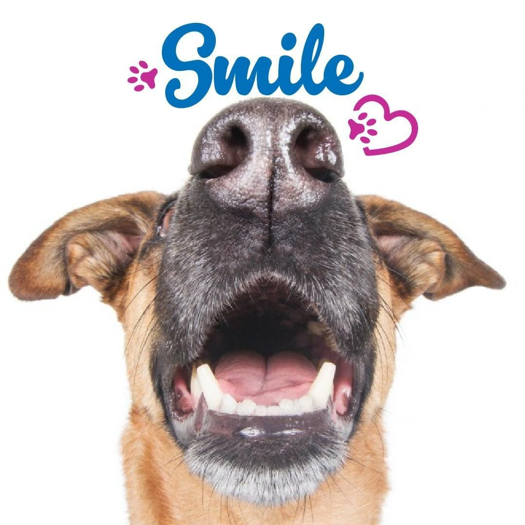 Smile It S Pet Dental Health Month Call And Make Your