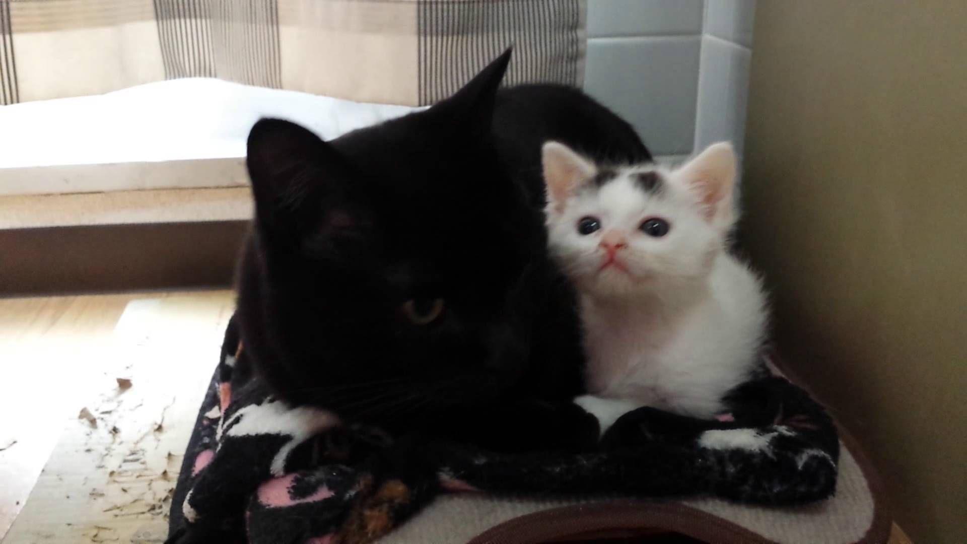 子猫ハムちゃん♥素敵な猫、修行中(笑)