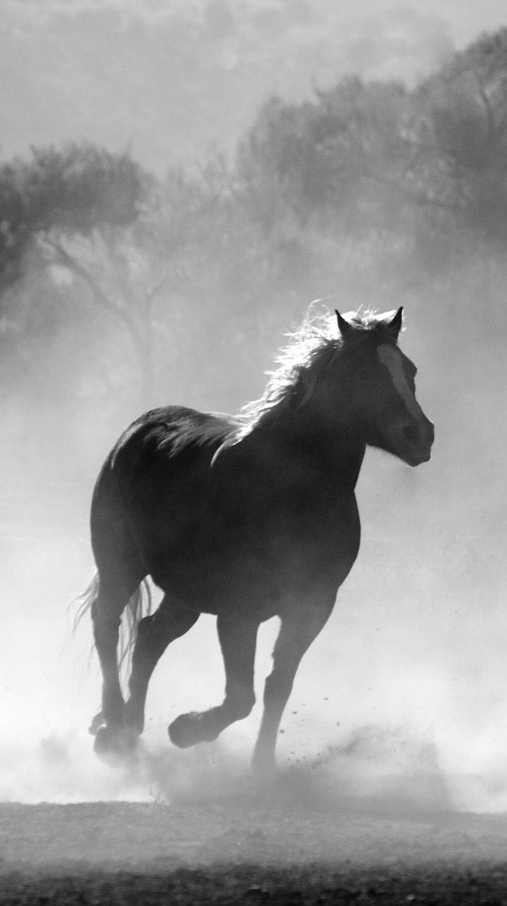 Top Wallpaper Horse Iphone 5s - 16452167cf77a7bb59563b163eba9f04  Photograph_906418.jpg