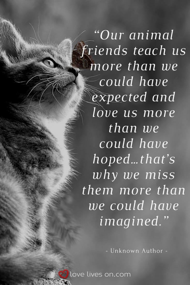 100+ Best Sympathy Quotes | Pet grief, Cat quotes, Cats