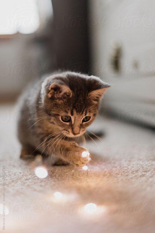 #happycatcolony -  #happycatcolony  - #allergictocats #catcat #cathouse #cattattoo #catwallpaper #catsandkittens #crazycats #dogcat #gatosaesthetic #Gatosanime #Gatosartesanato #gatoscats #Gatosdibujos #Gatosmanualidades #gatosmemes #gatostattoo #gatosvideos #happycatcolony #petscats #tudosobreGatos