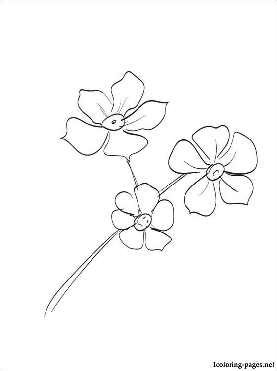 Forget Me Nots Coloring Page Coloring Pages Flower Drawing