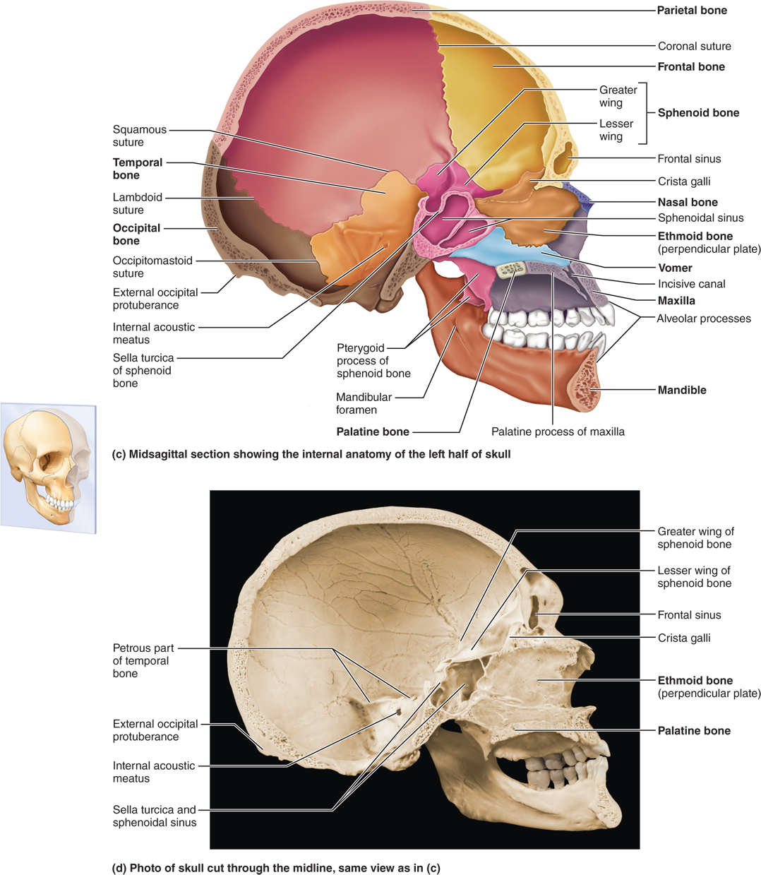 PART 1 THE AXIAL SKELETON - 7.1 The skull consists of 8 ...
