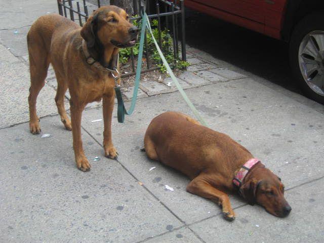 No dejes a tu perro amarrado afuera