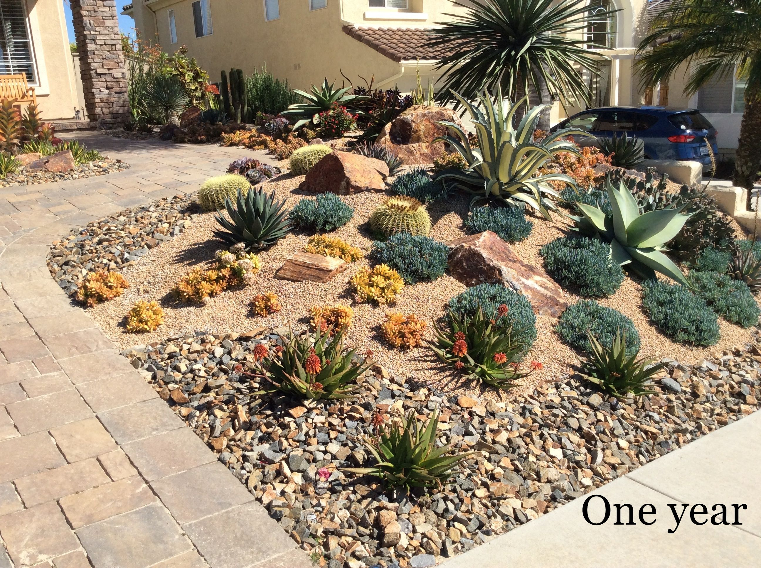 After the Lawn: A Front Yard of Succulents | Low Water Landscape ...