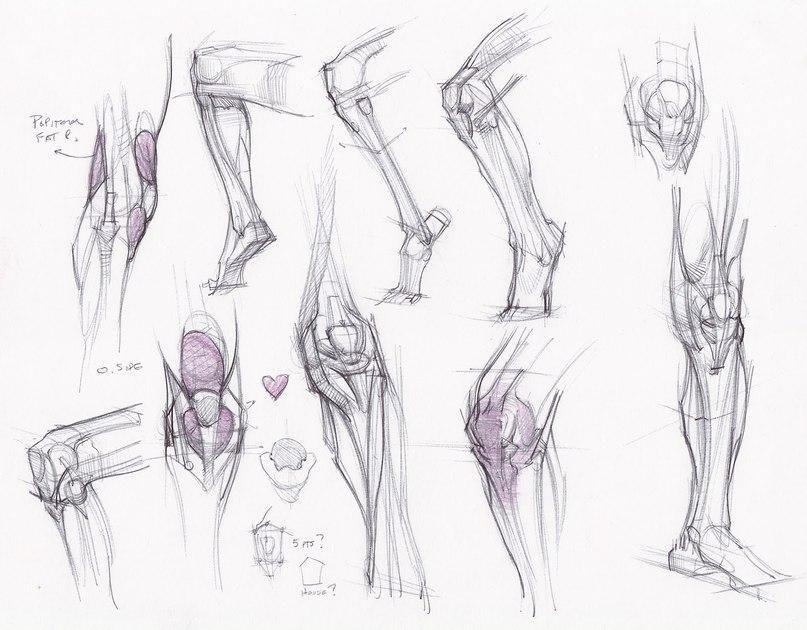 Tutorials Drawing Pinterest Anatomy Leg Anatomy