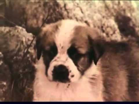 Vintage Gravy Train Dog Food Commercial With A Perfect Voice For