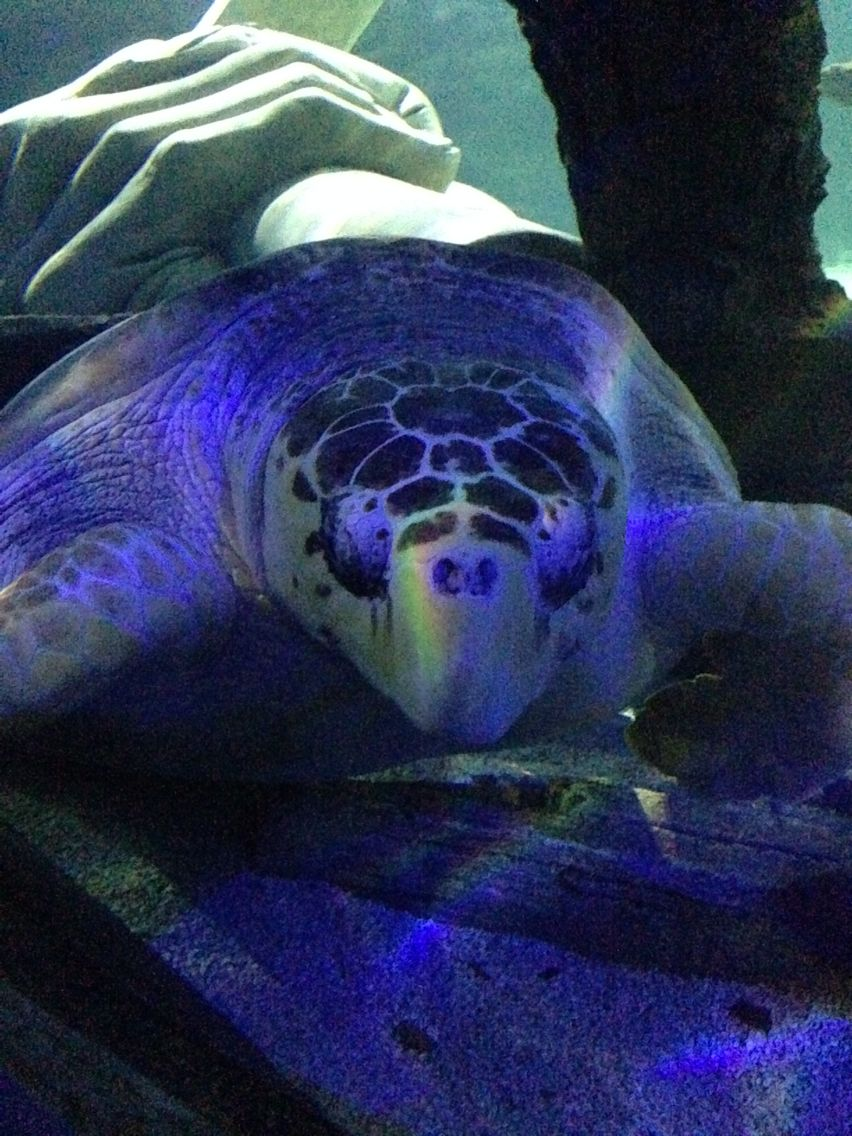 Aquarium Mall of America | Pets, Animals, Fish pet