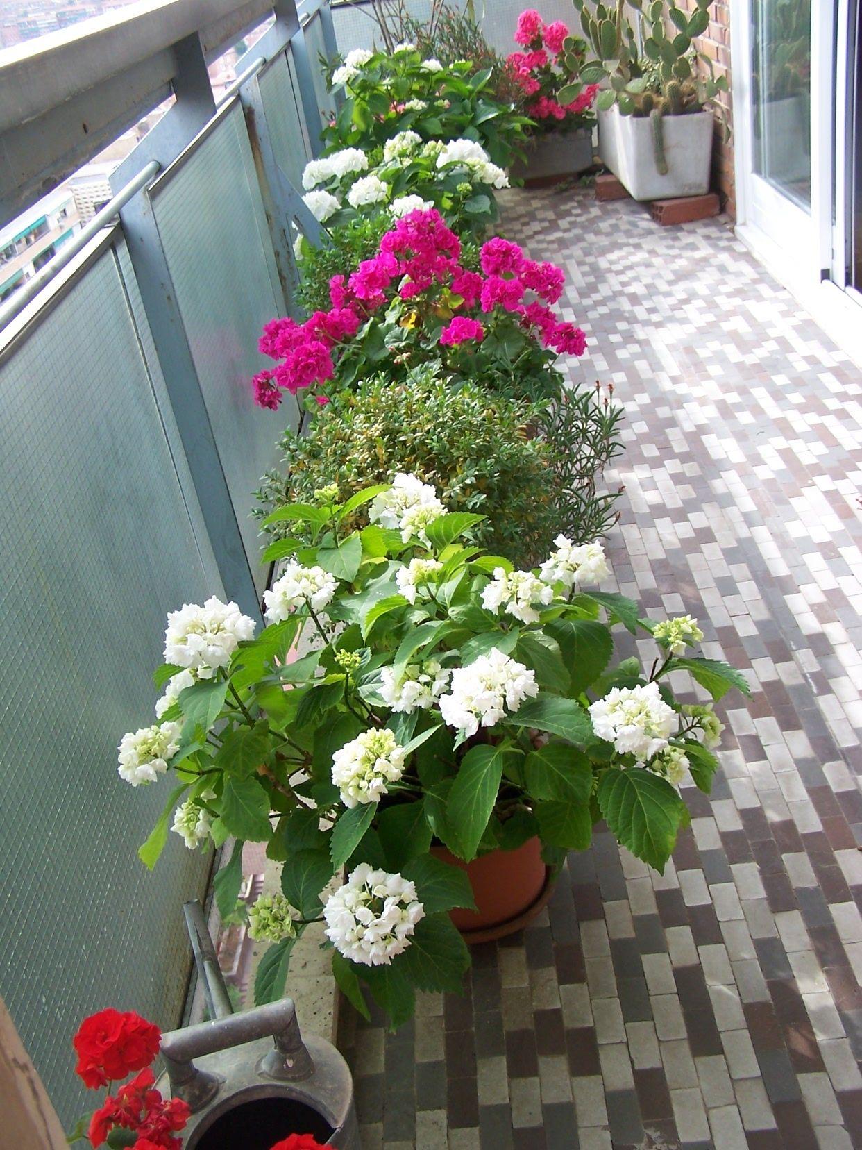 Mi Terraza Flores Terrazas