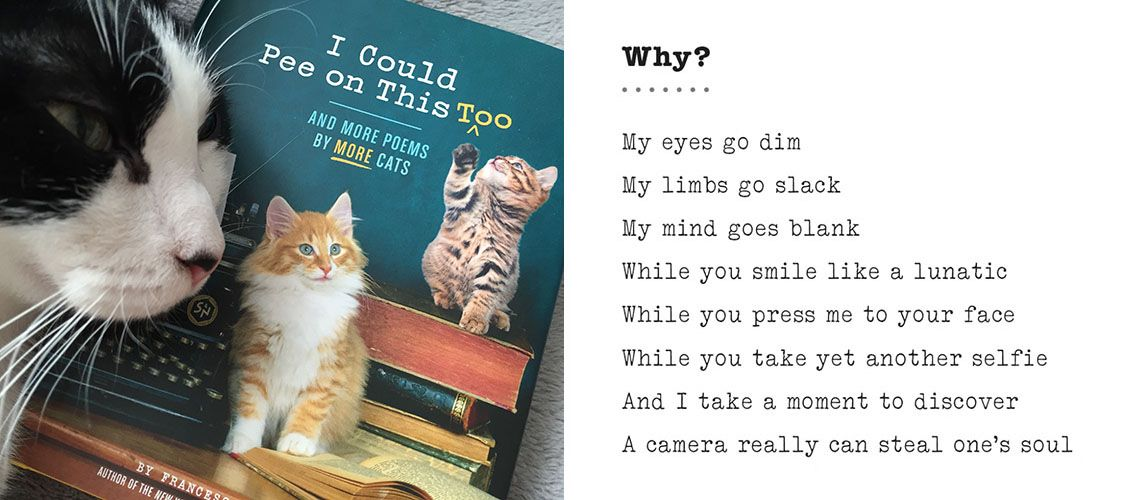 """""""Why?"""" from """"I Could Pee on This, Too: And More Poems by More Cats"""""""
