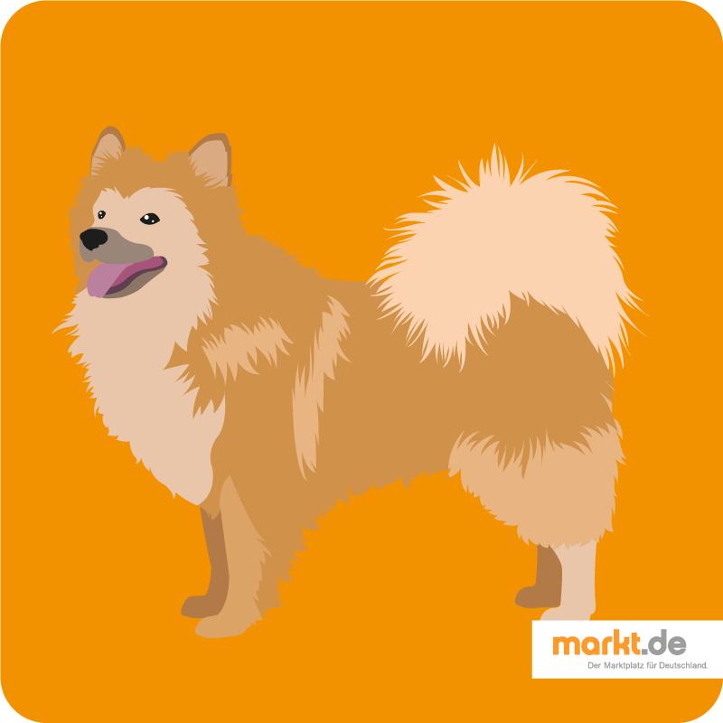 Islandhund Rasseportrait Charakter, Pflege & Co