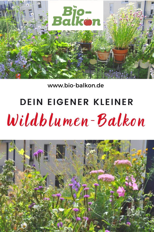 Wildblumen Auf Dem Balkon Blutenpracht In 2020 Balkon Pflanzen Pflanzen Wildblumen