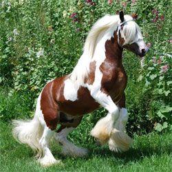 Jumping horsexx