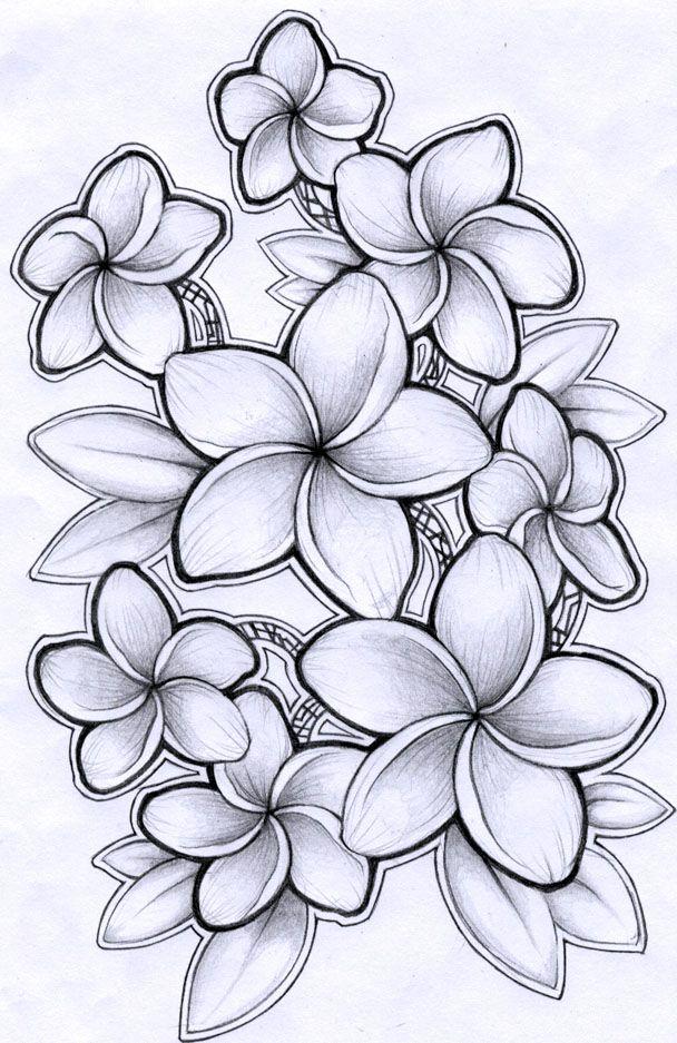 Plumeria Drawing : plumeria, drawing, Plumeria, Flower, Drawing,, Hawaiian, Tattoo