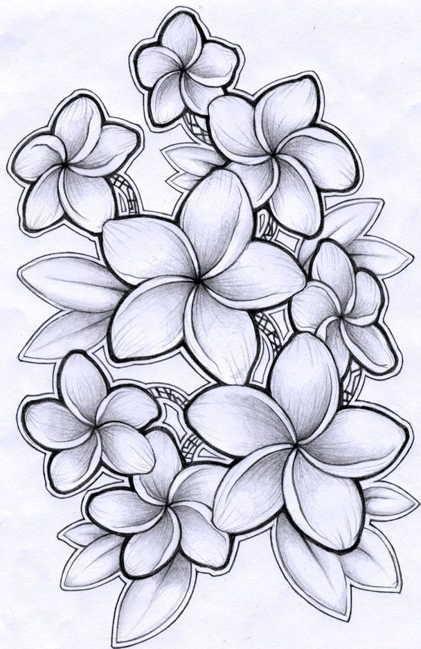 Plumeria Flower Line Drawing January 2013 - plumeria means