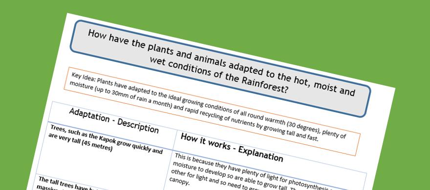 Rainforest Vegetation Adaptations 91 GCSE Geography