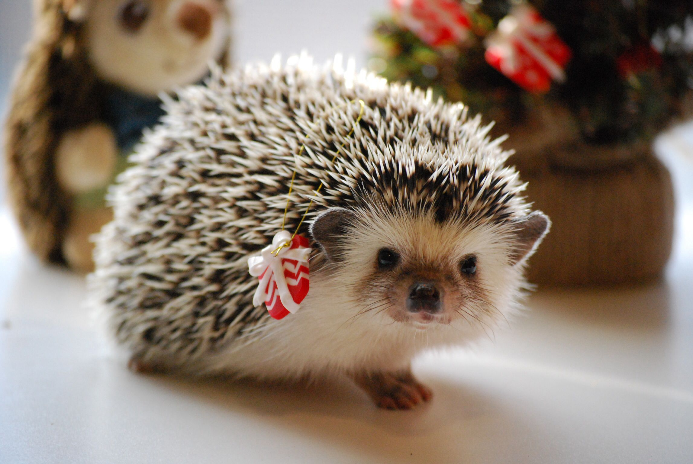Pin On Hedgies