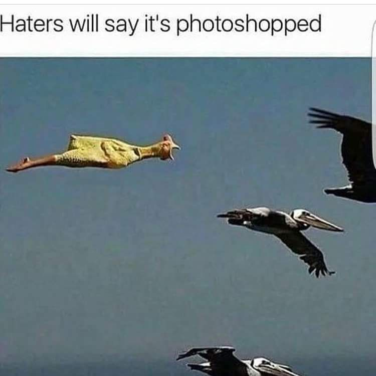Birds Of A Feather The Future Is Now Photoshop Bird Feathers