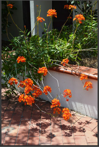5 unusual, and unusually easy, plants for Tampa Bay ...